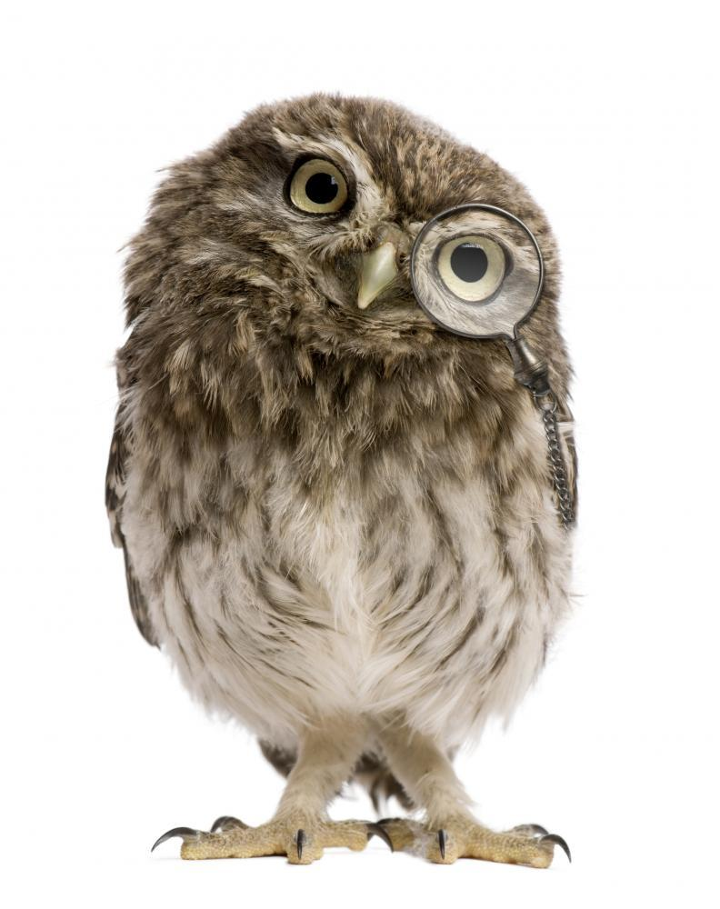 Little Owl Wearing Magnifying Animal Wall Sticker