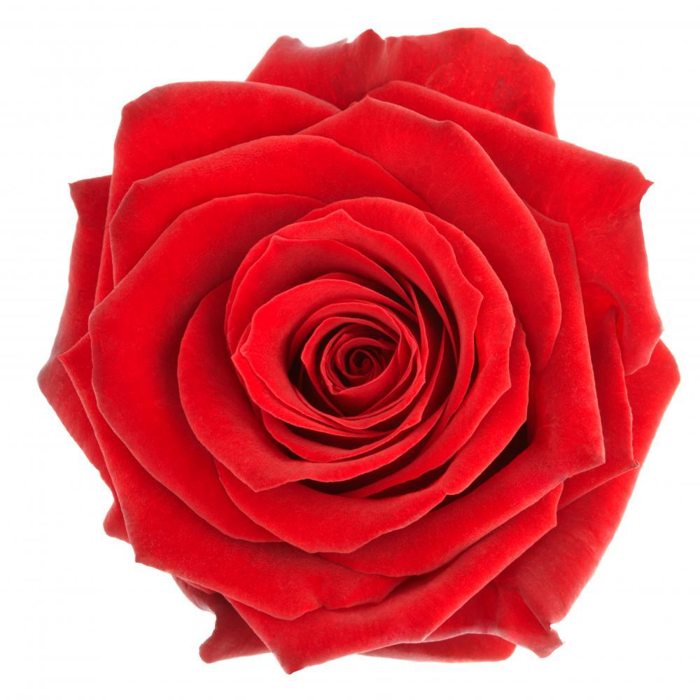 Beautiful Single Red Rose Flower Wall Mural Sticker - Flower-Wall-Stickers - Decall.ca