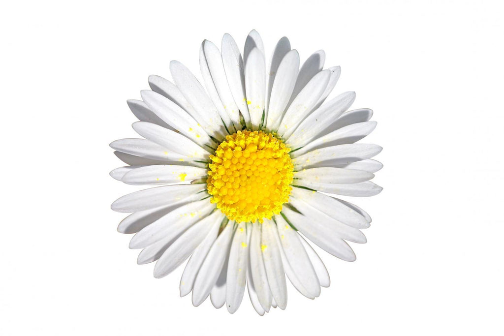Daisy D E round Flower Wall Mural Sticker - Flower-Wall-Stickers - Decall.ca