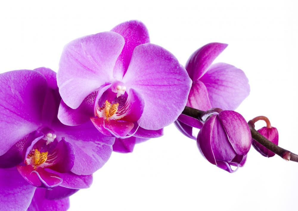Purple Orchid White Flower Wall Mural Sticker