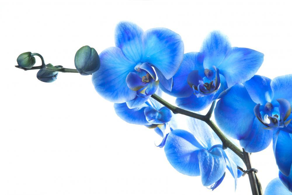Blue Orchid Flower Wall Mural Sticker - Flower-Wall-Stickers - Decall.ca