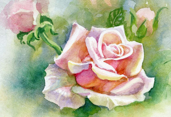Watercolor Flower Rose Flower Wall Mural