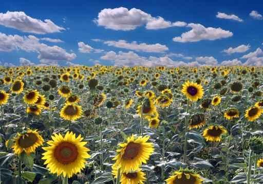 Field Sunflowers Flower Wall Mural