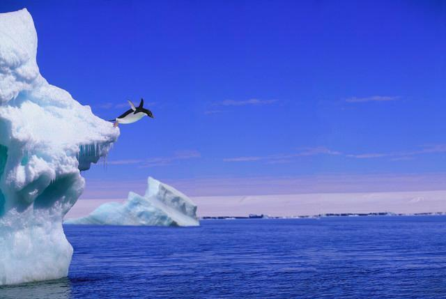 Adelie Penguin Jumping from Animal Wall Mural - Animal-Wall-Murals - Decall.ca