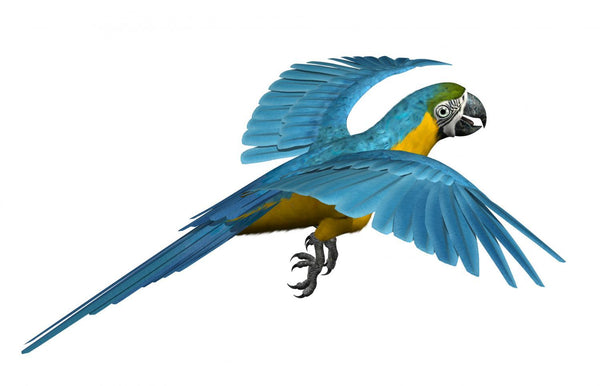 Blue and Gold Macaw Animal Wall Mural - Animal-Wall-Stickers - Decall.ca