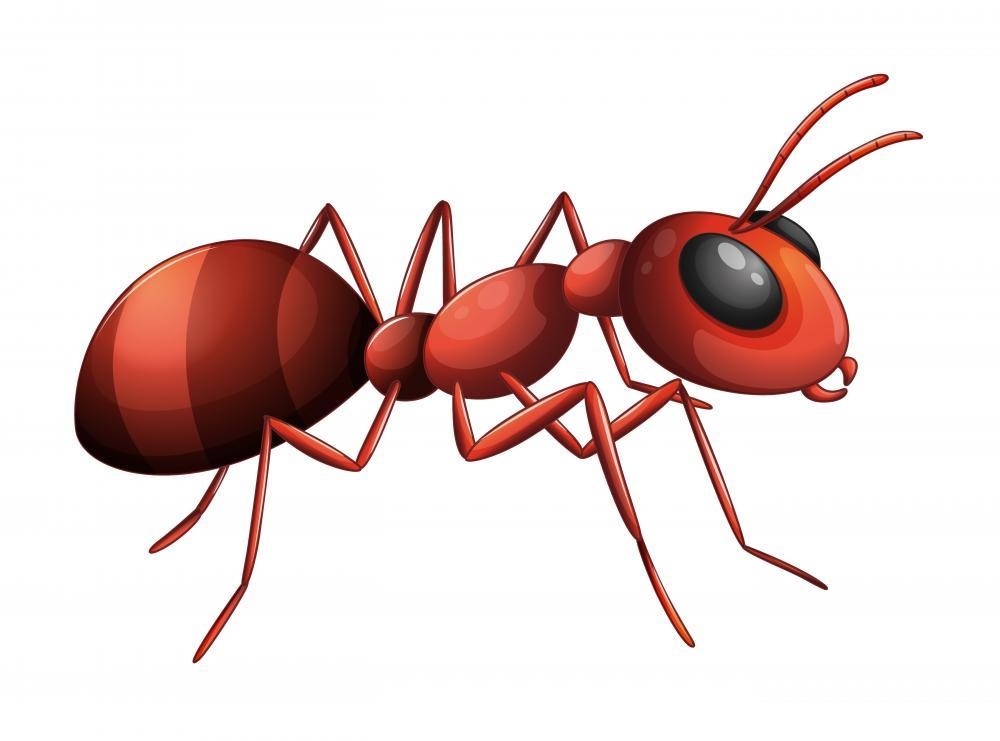 Ant Animal Wall Mural - Animal-Wall-Stickers - Decall.ca