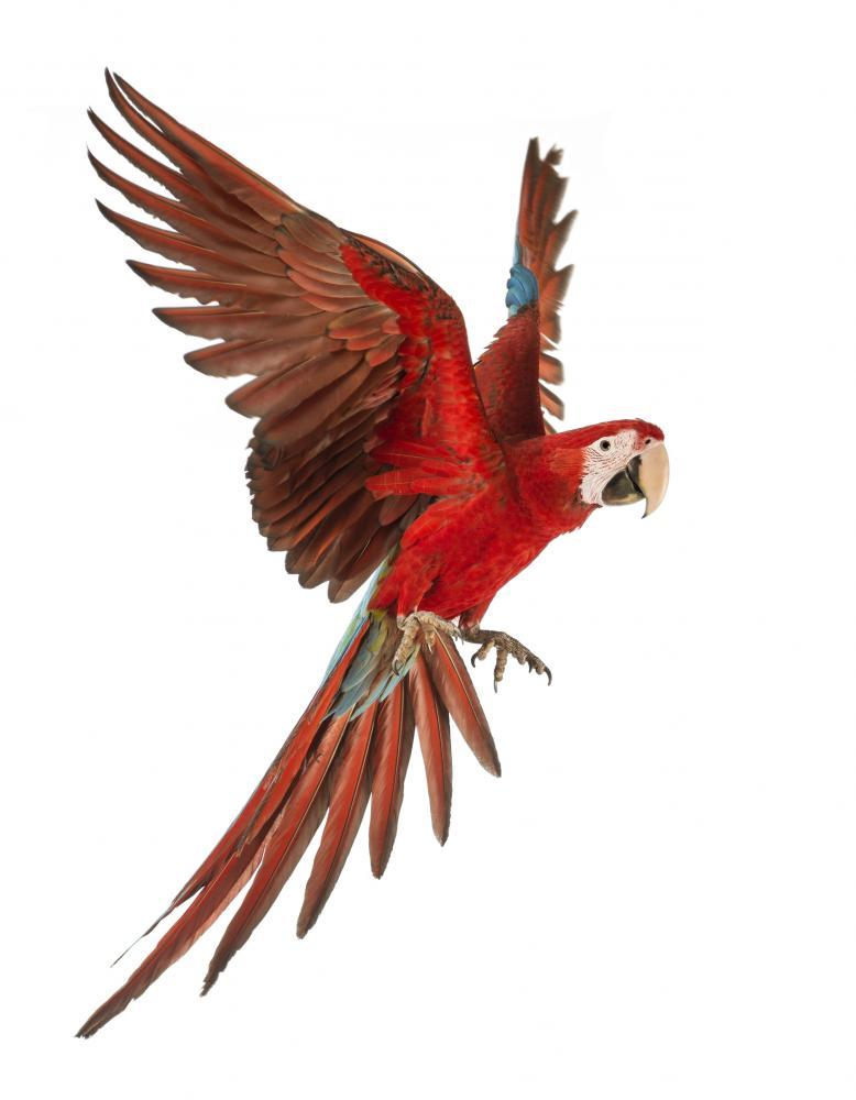 Green-winged Macaw Animal Wall Sticker