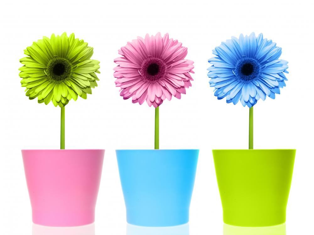 Colorful Flowers Pots Object Wall Mural Sticker