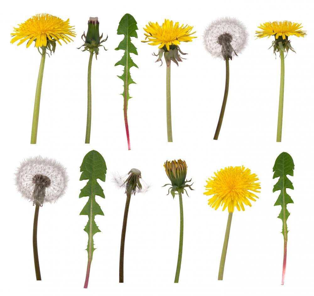 Dandelion Flowers and Leaves Flower Wall Mural Sticker - Flower-Wall-Stickers - Decall.ca