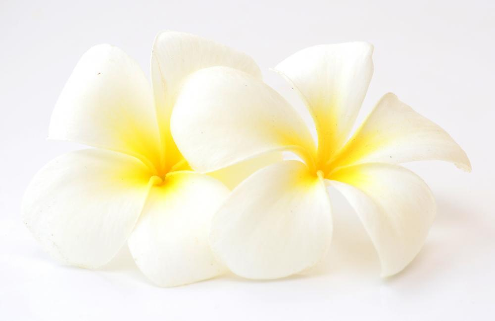 Frangipani Flowers Flower Wall Mural Sticker