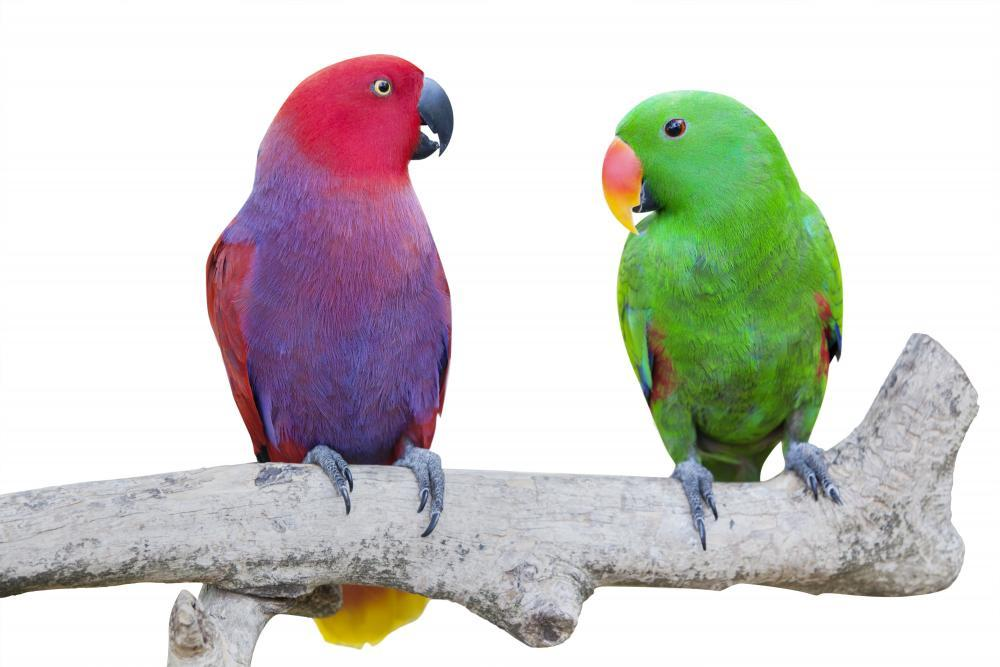 Two Cockatoo Birds Animal Wall Sticker