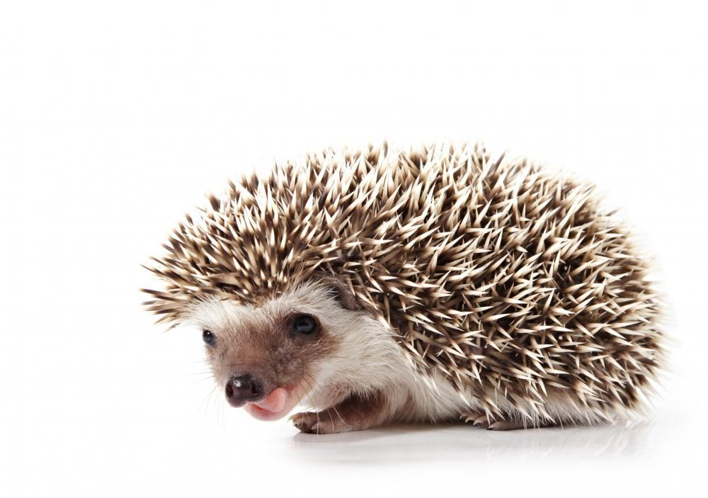 Hedgehog Animal Wall Sticker
