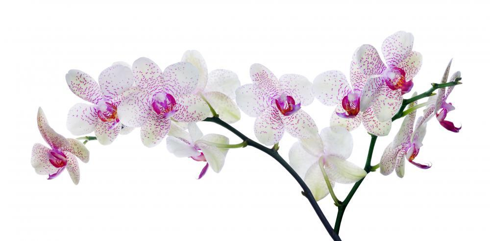 Light Color Orchid Flower Wall Mural Sticker