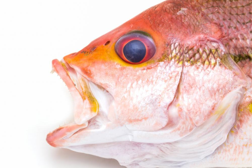 Fresh Red Snapper Fish Food & Drink Wall Mural Sticker