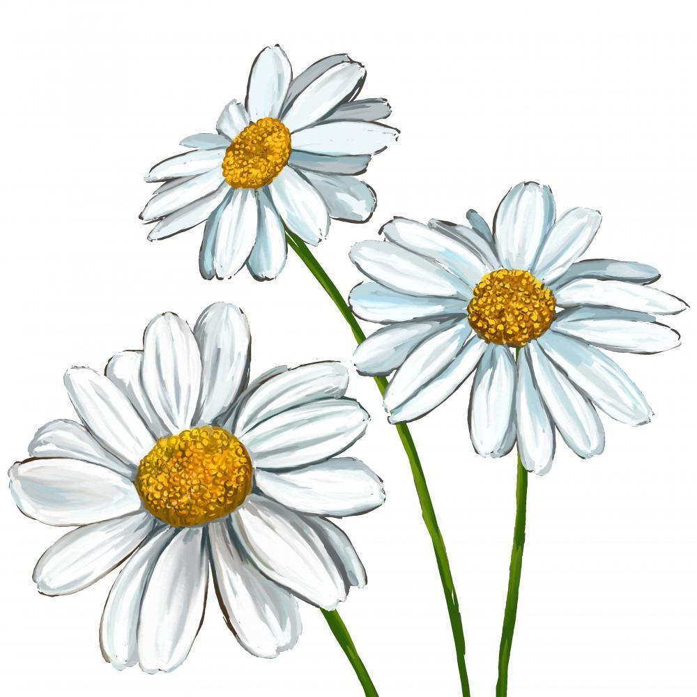 Daisy Vector Illustration Hand Flower Wall Mural Sticker - Flower-Wall-Stickers - Decall.ca