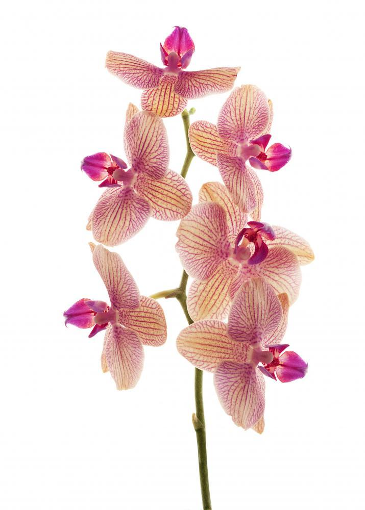 Branch Orchid Flowers White Flower Wall Mural Sticker - Flower-Wall-Stickers - Decall.ca