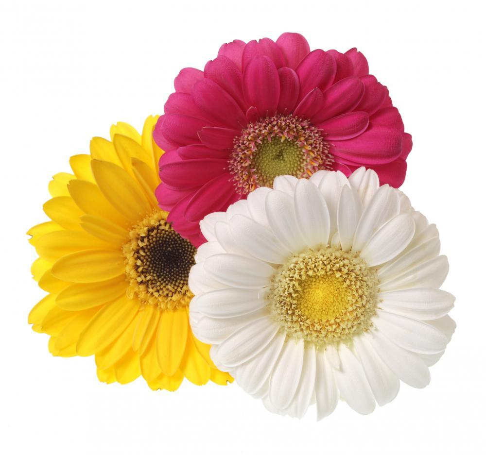 Gerbera Flowers White Flower Wall Mural Sticker