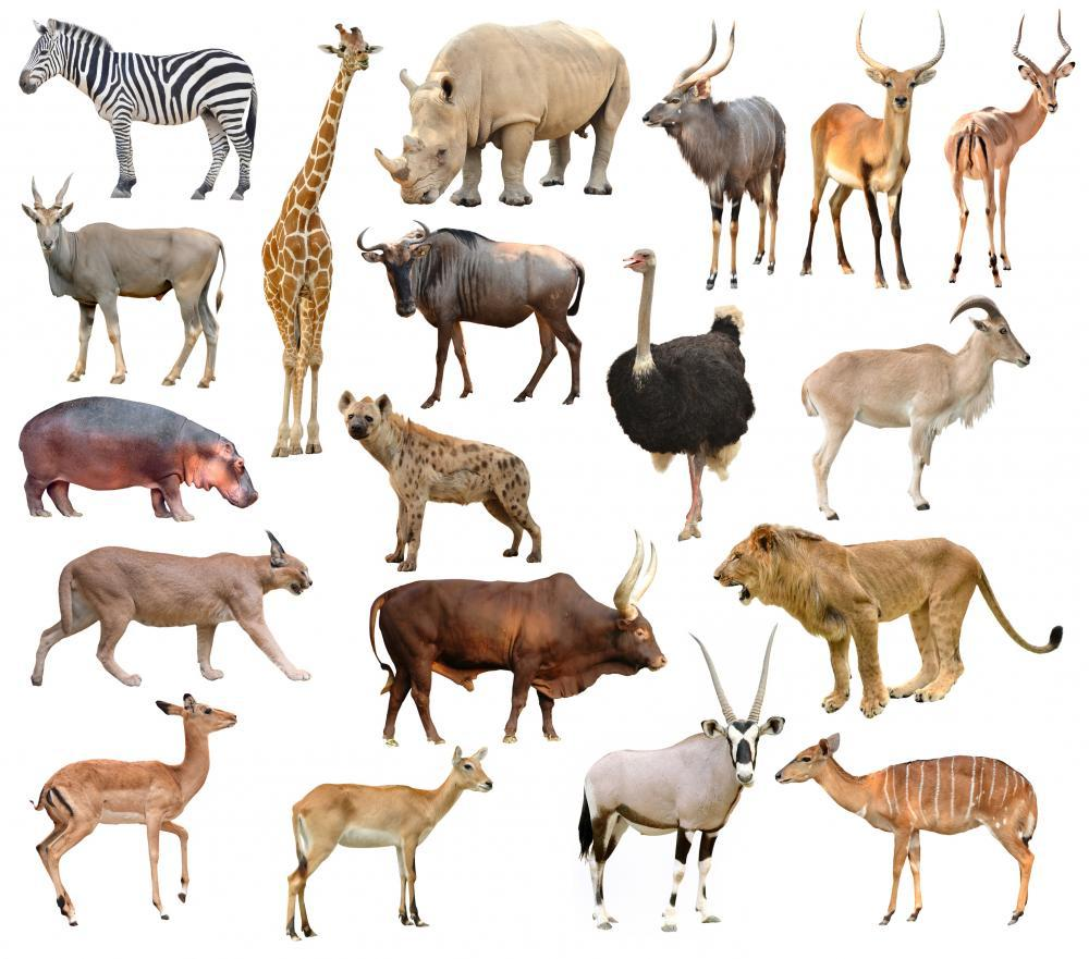 Africa Animals Wall Mural - Animal-Wall-Stickers - Decall.ca