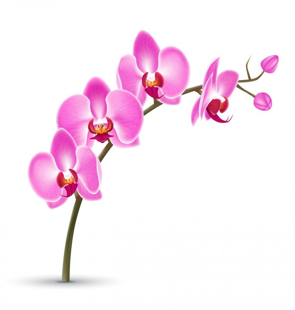 Branch Pink Orchid White Flower Wall Mural Sticker - Flower-Wall-Stickers - Decall.ca