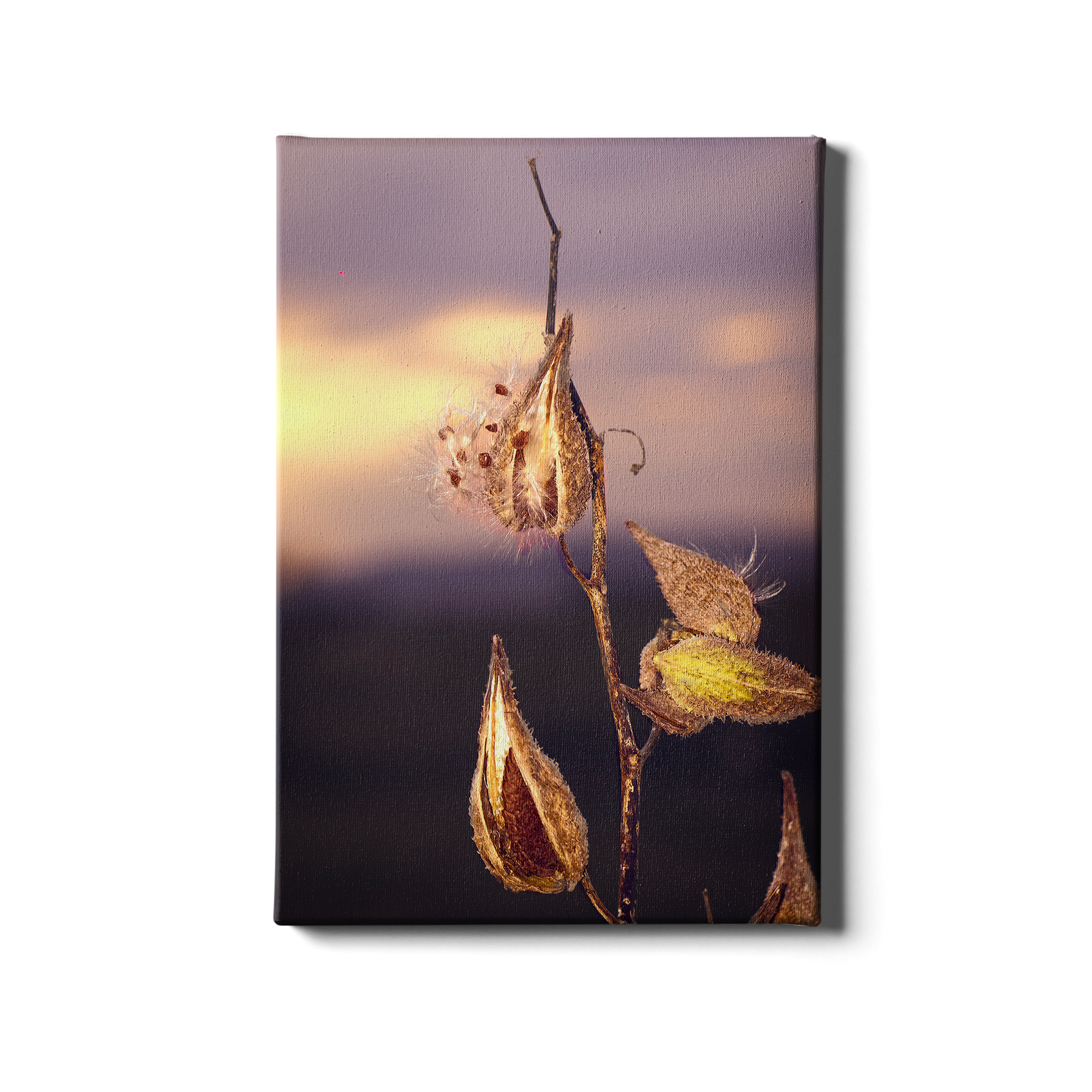 Milk Weed - College Wall Art
