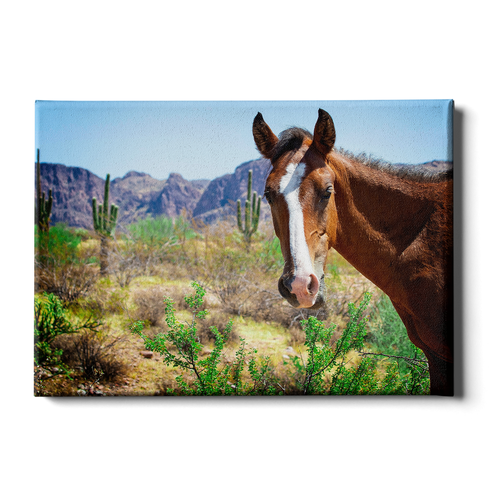 Wild Horses of Salt River Arizona - College Wall Art