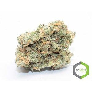 Green Crack 32.12% THC ( Sativa )