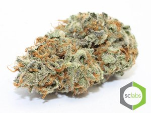 Grand Daddy Purple 21.05% THC ( Indica )