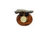 Small size cremation gourd urn grown and crafted in the U.S. desert-southwest and a include bronze memorial pendant that hangs from ornamental drift-wood.