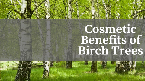 Cosmetic Benefits of Birch Trees