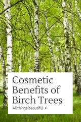 Cosmetic Benefits of Birch Trees Blog