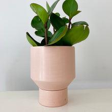 The Northern Habitat | Funnel Planter | Small 5""