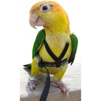 Aviator Harness & Leash - Extra Small (RED - OUT OF STOCK)
