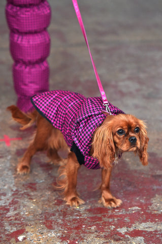 LULA LAORA AW21 Getty Images, womenswear model wears pink fine houndstooth puffy shoes that are matching the dogs pink houndstooth jacket as well. The dog is a King Charles cavalier.