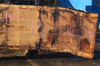 012819-04 Oregon White Oak Slab