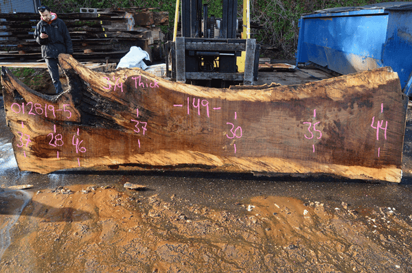 012819-05 Oregon White Oak Slab