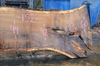 012819-08 Oregon White Oak Slab
