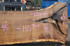 012819-11 Oregon White Oak Slab
