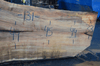 020419-06 Big Leaf Maple Slab