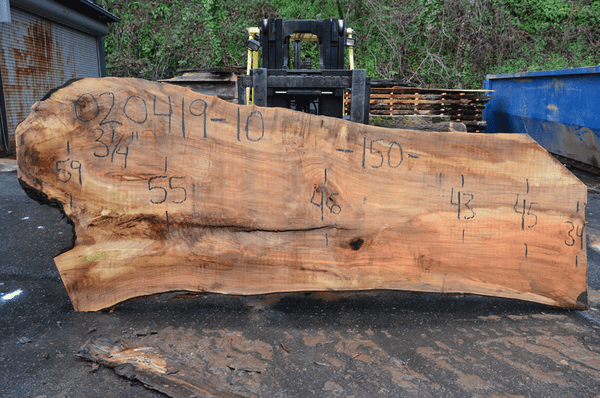 020419-10 Big Leaf Maple Slab