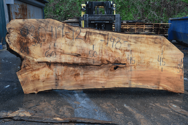 020419-12 Big Leaf Maple Slab
