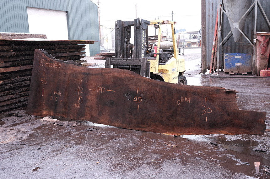 Oregon Black Walnut Slab 022318-07