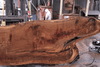Oregon White Oak Slab 022518-09