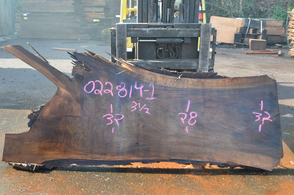 Oregon Black Walnut Slab 022814-01