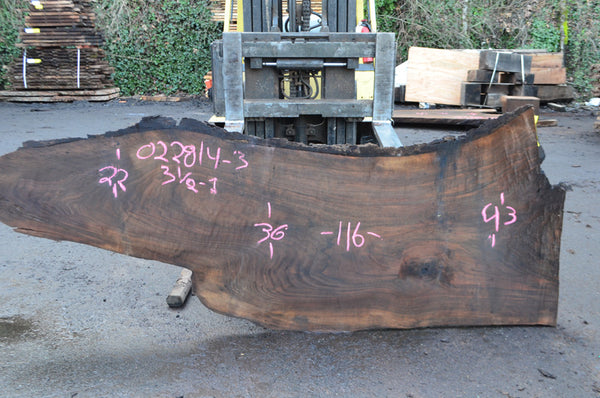 Oregon Black Walnut Slab 022814-03