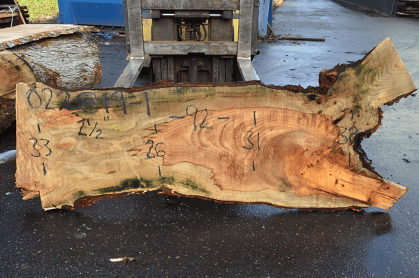 022819-01 Big Leaf Maple Slab