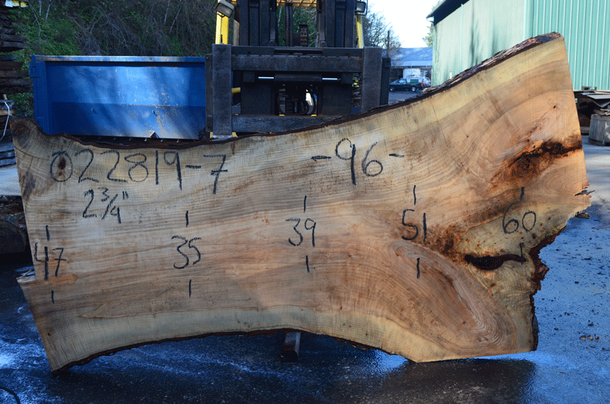 022819-07 Big Leaf Maple Slab