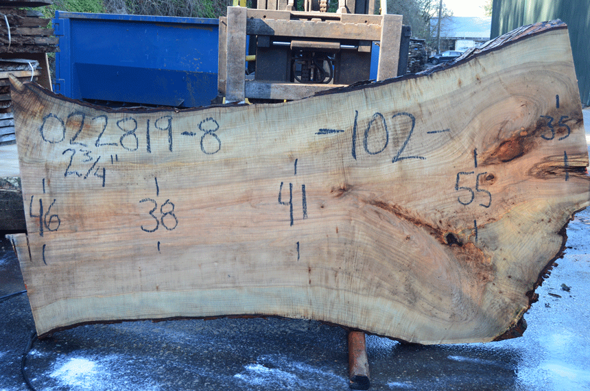 022819-08 Big Leaf Maple Slab