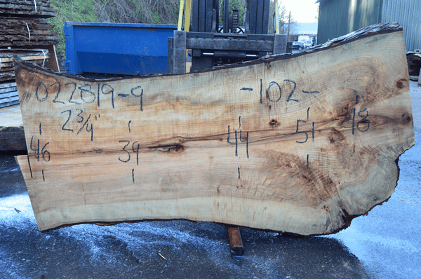 022819-09 Big Leaf Maple Slab