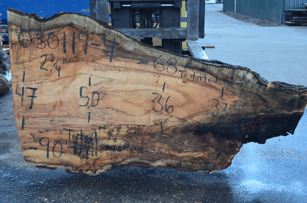 030119-04 Big Leaf Maple Slab