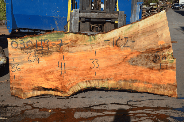 030119-07 Big Leaf Maple Slab